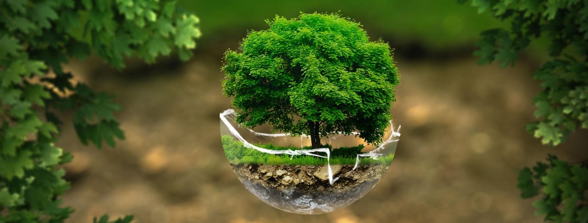 Ecologie monde sans frontiere