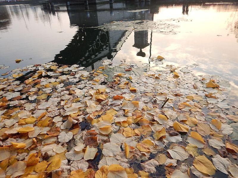 Accumulation de feuilles mortes