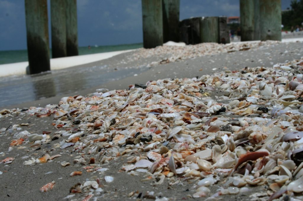 Une plage atteint de la pollution alimentaire