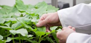 protection de plantes contre la cochenille farineuse