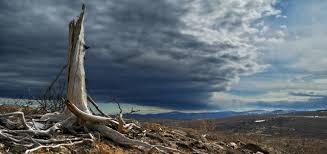 la destruction de l'environnement.