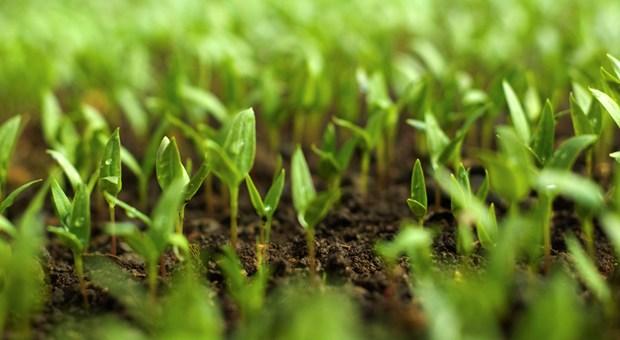 l'agriculture bio.