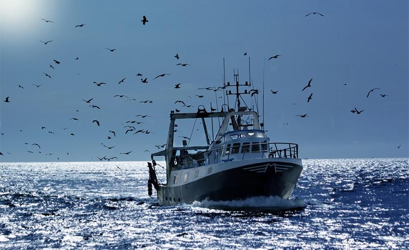 la pêche intensive.