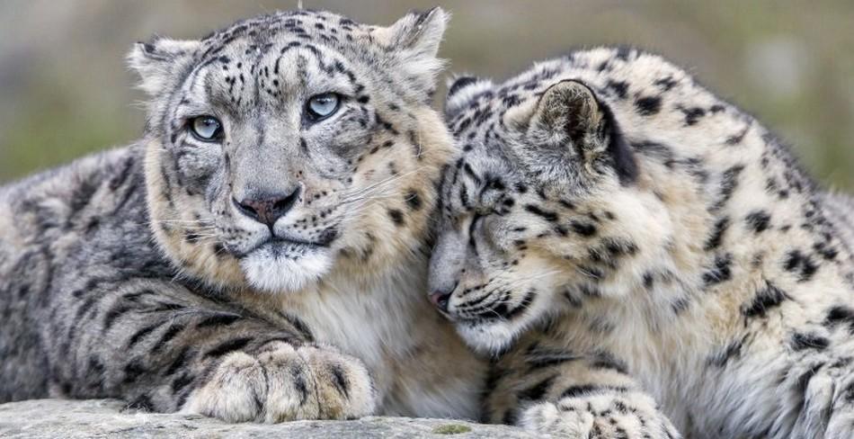 espèces animales menacées.
