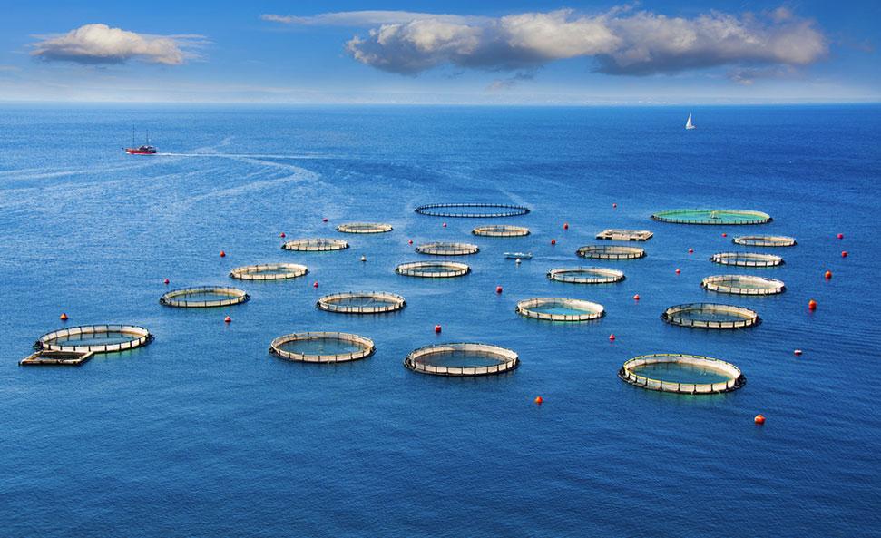 l'aquaculture.